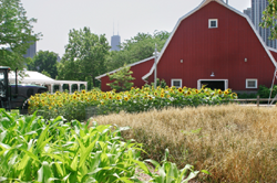 Farm in Illinois with city in background.