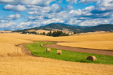 Farmland near Spokane, Washington